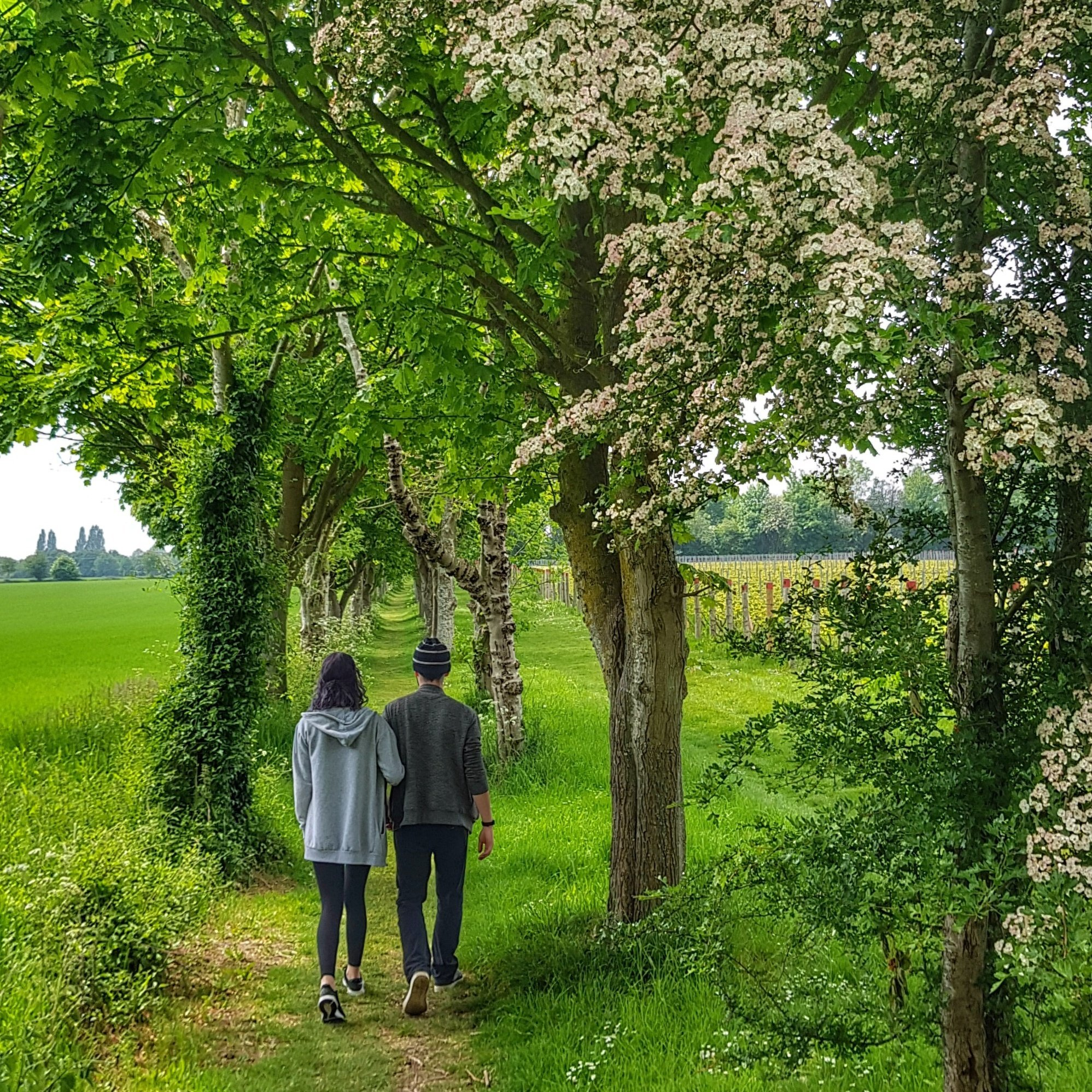 Guided walks in Sussex