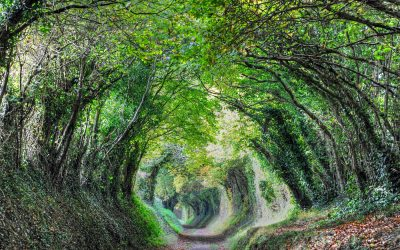 Halnaker Tree Tunnel Walk to a Sussex Windmill