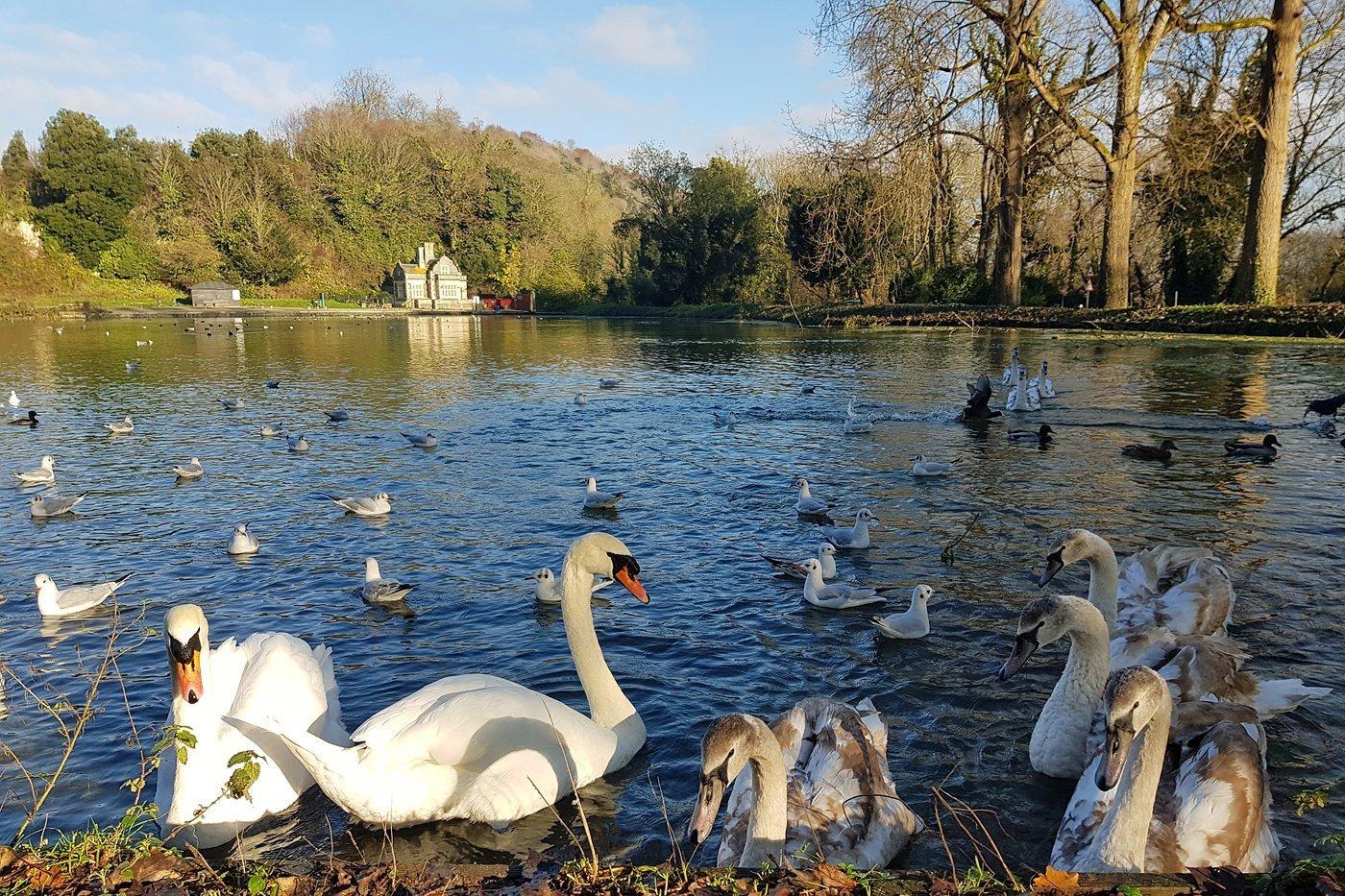 Swanbourne Lake, December