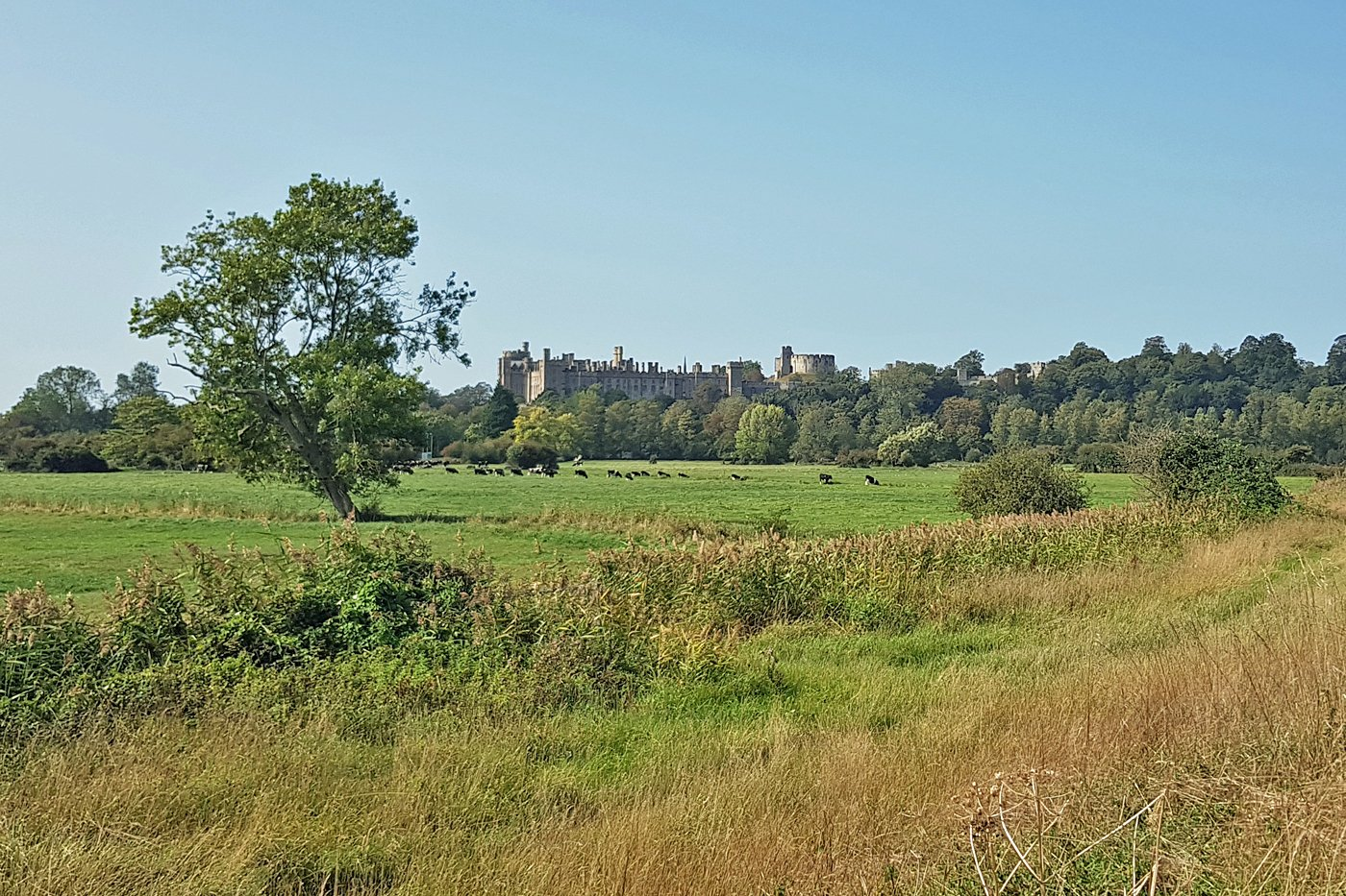 View of Arundel Castle from the River Arun footpath